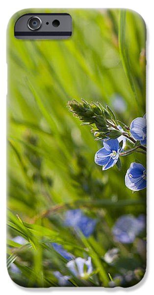 Germander Speedwell iPhone Case by Anne Gilbert