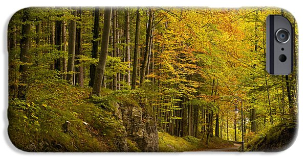 Bayern iPhone Cases - Germany, Bavaria, Schwangau, Forest © iPhone Case by Tips Images