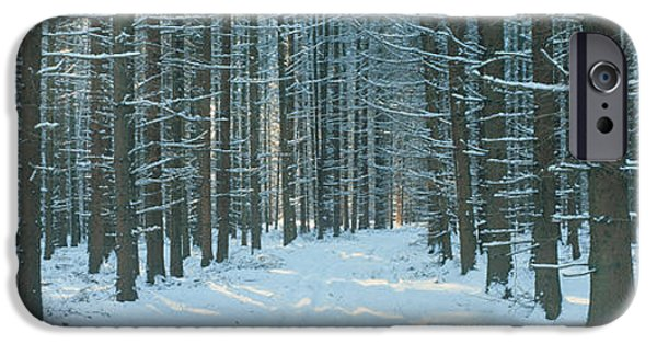 Pines iPhone Cases - Germany iPhone Case by Panoramic Images