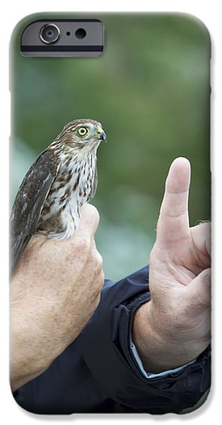 Hawk Art Print iPhone Cases - Getting the Finger iPhone Case by Phill  Doherty