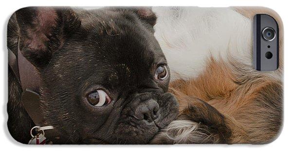 Dog Close-up iPhone Cases - Gggrrrrrrrrrrrrrrr iPhone Case by Linsey Williams