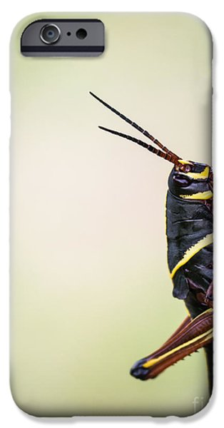 Everglades iPhone Cases - Giant Eastern Lubber Grasshopper iPhone Case by Edward Fielding