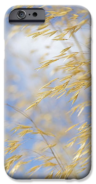 Giant Feather Grass iPhone Case by Tim Gainey