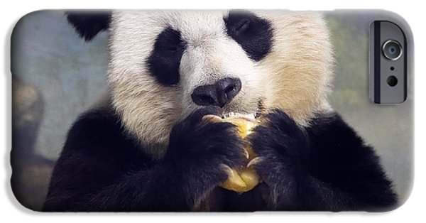 Smithsonian iPhone Cases - Giant Panda Bear Close-up iPhone Case by Jack Nevitt