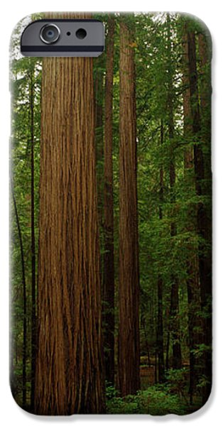 Forest Floor iPhone Cases - Giant Redwood Trees Ave Of The Giants iPhone Case by Panoramic Images