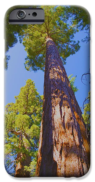 Tree Roots iPhone Cases - Giant Sequoia iPhone Case by Barbara Snyder