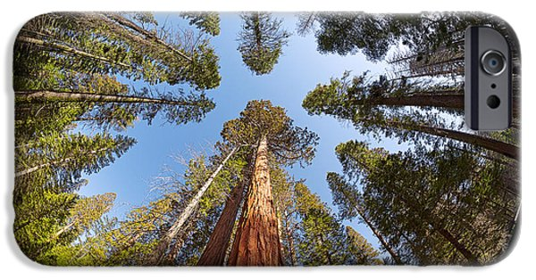 Pines iPhone Cases - Giant Sequoia Fisheye iPhone Case by Jane Rix