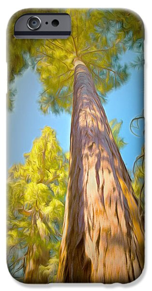 Tree Roots Paintings iPhone Cases - Giant Sequoia Tree iPhone Case by Barbara Snyder