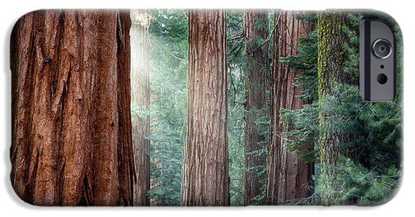 Ancient iPhone Cases - Giant Sequoias in early morning light iPhone Case by Jane Rix
