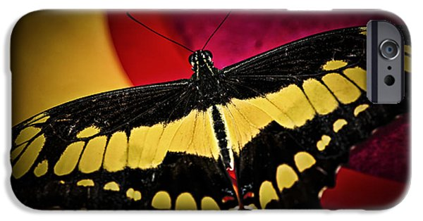 Giant iPhone Cases - Giant swallowtail butterfly iPhone Case by Elena Elisseeva