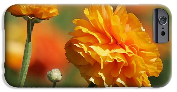 Interior Still Life iPhone Cases - Giant Tecolote Ranunculus - Carlsbad Flower Fields CA iPhone Case by Christine Till