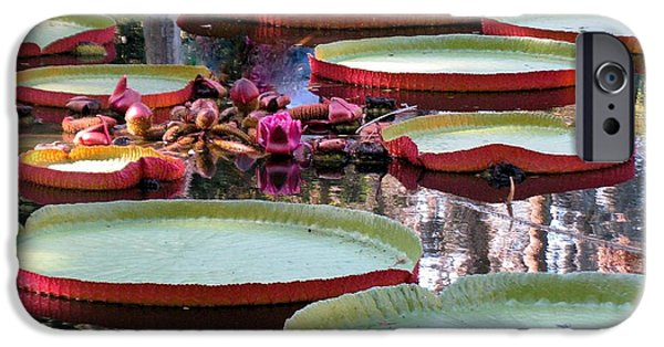 Garden Photographs iPhone Cases - Giant water lily and pads iPhone Case by Zina Stromberg