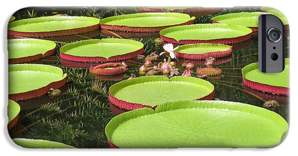 Summer iPhone Cases - Giant water lily platters iPhone Case by Zina Stromberg