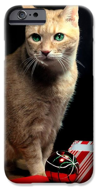 Orange Tabby iPhone Cases - Gift for Whiskey iPhone Case by Diana Angstadt