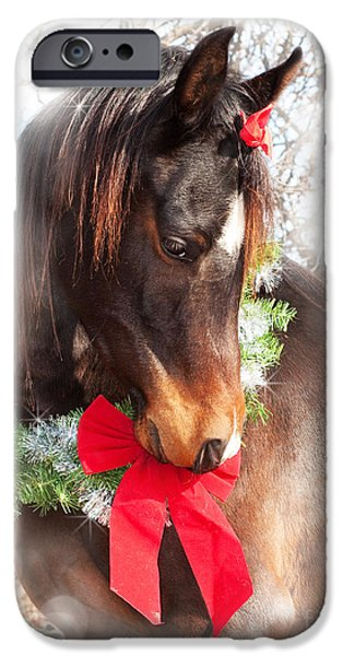 Gift Horse iPhone Case by Sari ONeal
