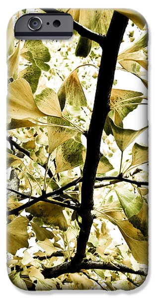 Recently Sold -  - Plant iPhone Cases - Ginkgo Leaves iPhone Case by Frank Tschakert