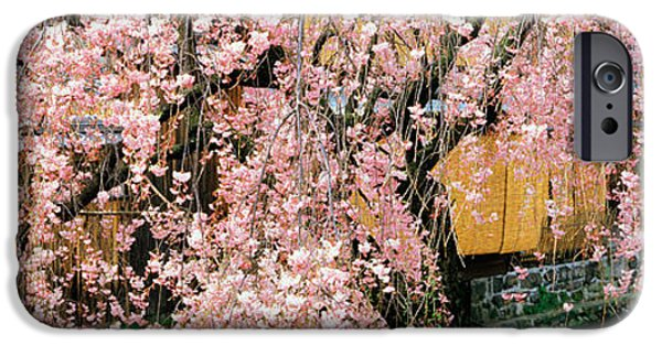 Kyoto iPhone Cases - Gionshirakawa Cherry Blossom Kyoto Japan iPhone Case by Panoramic Images