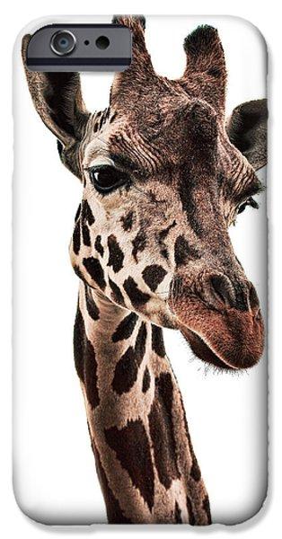 New Attitudes iPhone Cases - Giraffe 1 iPhone Case by Marcia Colelli