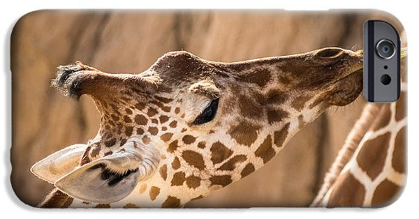 Fed iPhone Cases - Giraffe being hand fed lettuce iPhone Case by IBC Stock Images