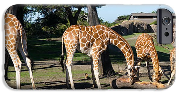 Strange iPhone Cases - Giraffe DSC2872 long iPhone Case by Wingsdomain Art and Photography