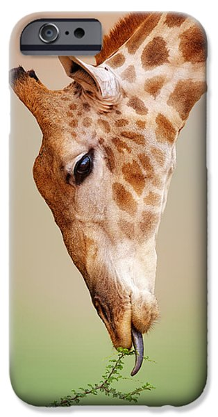 Giraffes iPhone Cases - Giraffe eating close-up iPhone Case by Johan Swanepoel