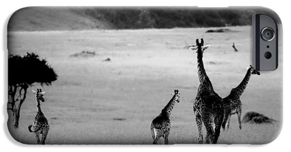 Giraffes iPhone Cases - Giraffe in Black and White iPhone Case by Sebastian Musial
