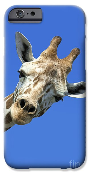 Friendly iPhone Cases - Giraffe iPhone Case by John Greim