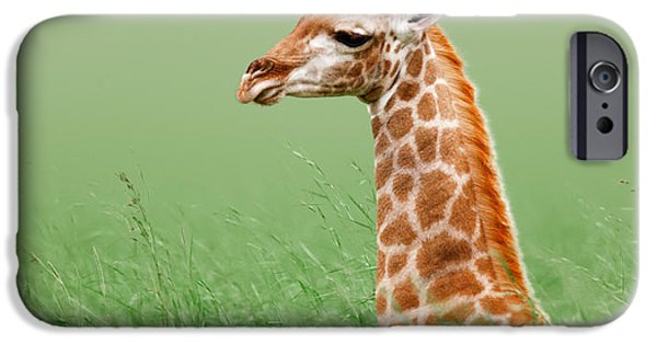 Giraffes iPhone Cases - Giraffe lying in grass iPhone Case by Johan Swanepoel