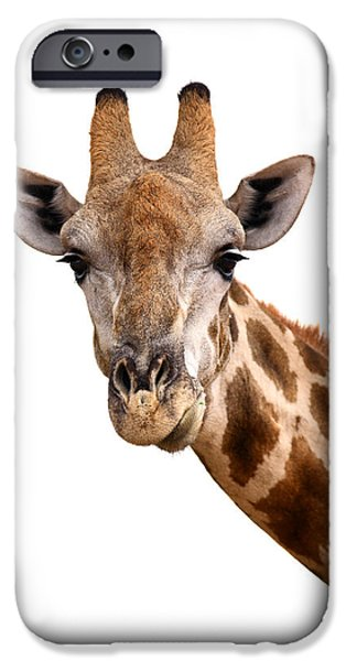 Giraffes iPhone Cases - Giraffe portrait iPhone Case by Johan Swanepoel