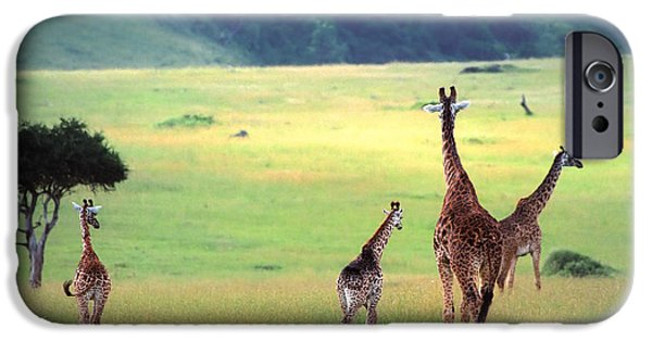African Wildlife iPhone Cases - Giraffe iPhone Case by Sebastian Musial
