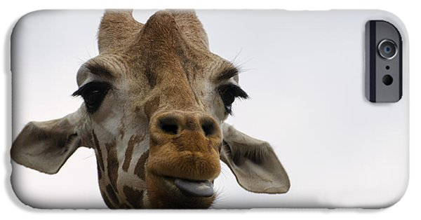 Giraffe Digital iPhone Cases - Giraffe sticking out tongue iPhone Case by Chris Flees