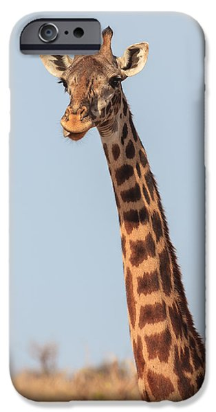 Nature Study iPhone Cases - Giraffe Tongue iPhone Case by Adam Romanowicz