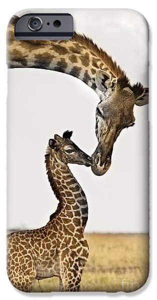 Giraffes iPhone Cases - Giraffes First Kiss iPhone Case by Carol Walker