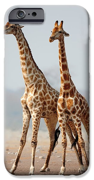 Stand iPhone Cases - Giraffes standing together iPhone Case by Johan Swanepoel
