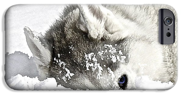 Huskies iPhone Cases - Giving Me The Eye iPhone Case by May Finch