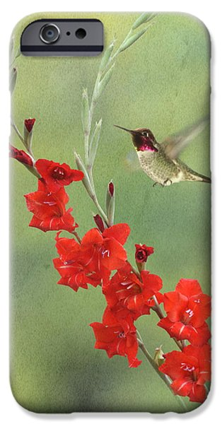 Hovering iPhone Cases - Glad Hummingbird iPhone Case by Angie Vogel