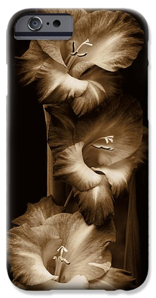 Gladiolas iPhone Cases - Gladiola Flowers Evening Light in Sepia iPhone Case by Jennie Marie Schell