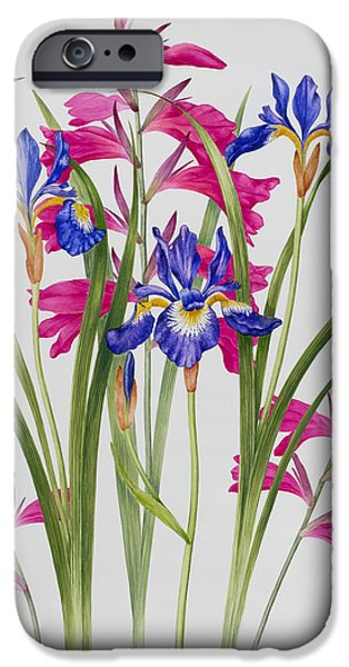 Gladioli iPhone Cases - Gladiolus and Iris Sibirica iPhone Case by Sally Crosthwaite