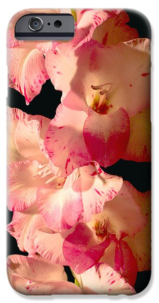 Gladioli iPhone Cases - Gladiolus Flower Still Life iPhone Case by Keith Webber Jr