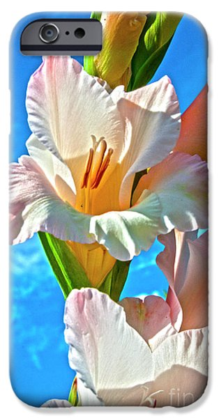 Gladioli iPhone Cases - Gladiolus iPhone Case by Heiko Koehrer-Wagner