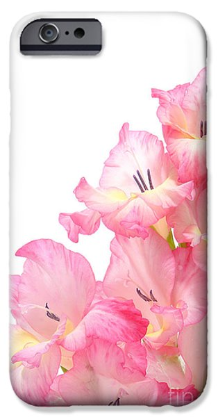 Gladiolas iPhone Cases - Gladiolus iPhone Case by Olivier Le Queinec