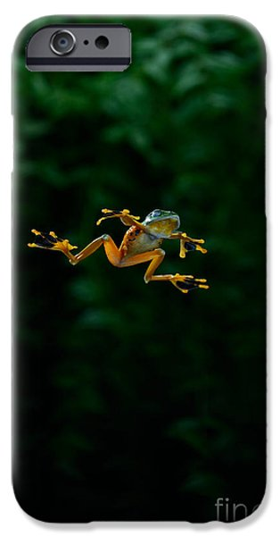 Flying Frog iPhone Cases - Gliding Frog In Flights iPhone Case by Scott Linstead