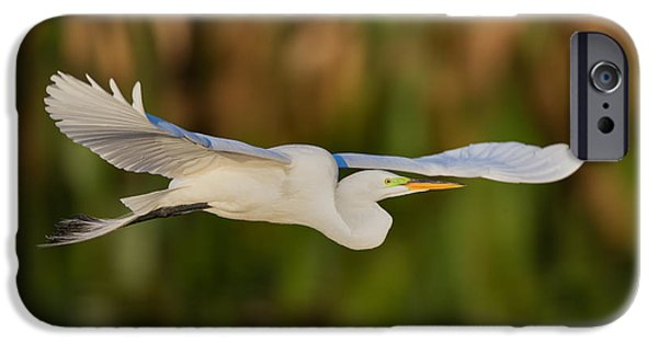 Fauna iPhone Cases - Gliding Great Egret iPhone Case by Andres Leon