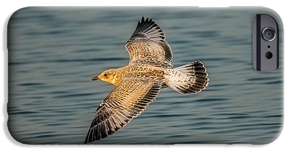 Sea Birds iPhone Cases - Gliding Gull iPhone Case by Paul Freidlund