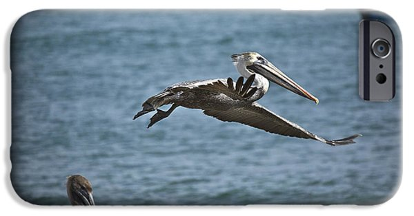 Sea Birds iPhone Cases - Gliding iPhone Case by Joel P Black