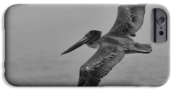 Sea Birds iPhone Cases - Gliding Pelican in Black and White iPhone Case by Sebastian Musial