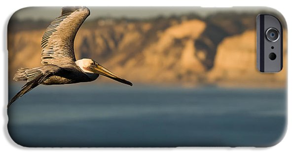 Majestic iPhone Cases - Gliding Pelican iPhone Case by Sebastian Musial