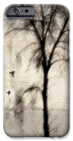 Glimpse of a Coastal Pine iPhone Case by Carol Leigh