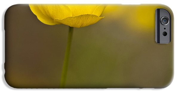 Plant iPhone Cases - Globe Flower iPhone Case by Heiko Koehrer-Wagner