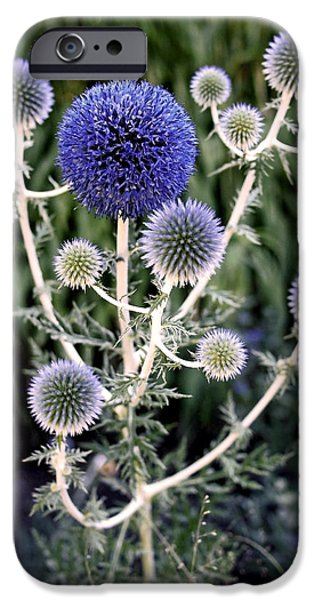 Thistle iPhone Cases - Globe Thistle iPhone Case by Rona Black